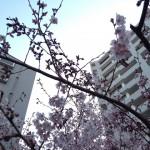 花粉練 ~二週目