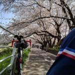 桜と菜の花とお蕎麦~早いけど遅い記事