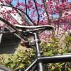 3か月ぶりに自転車に乗ってみた。CAAD10