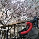 自転車乗るよー!桜を探そう!