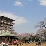 向ケ丘遊園:枡形山展望台でお花見@DBK