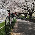 まだまだ桜は続く~海軍道路から境川へ