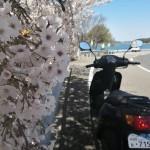 しまなみ海道で桜をさがす2020_04_05